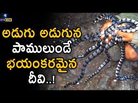అడుగు అడుగున పాములుండె భయంకరమైన ధీవి..! | Snake Island | Ilha da Queimada Grande | Eyecon Facts