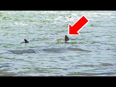 Great White Shark Spotted In Mississippi River?