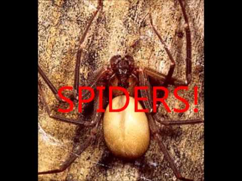 Keep spiders, bed bugs, fleas and ticks out of your bed.