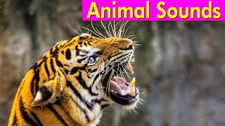 20 Wild Animals - Animal Sounds for Kids to Learn