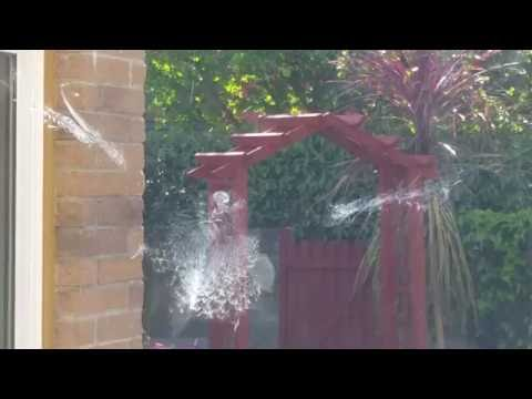 Ghostly image of a bird after striking window