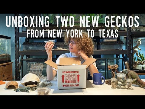 UNBOXING TWO NEW LIZARDS - Shipped From New York to Texas!