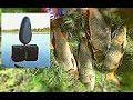 Download  ЭТО КЛАСИКА!!! ДИКИЙ САЗАН НА ЖМЫХ. В гостях Женя с канала Рыбалка 68. Рыбалка с ночевкой. MP3,3GP,MP4