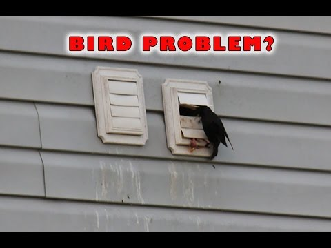 Dryer Vent Bird Guard | Dryer Vent Bird Stop