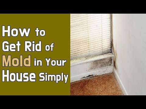 How to Get Rid of Mold in Your House Simply
