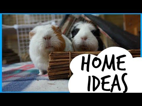 Guinea Pig Home Ideas | My Setups