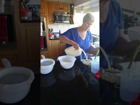 Making milk Kefir