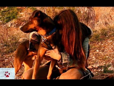Everlasting love - a rescue dog's story