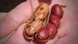 Peanut Recipe Boiled Peanuts