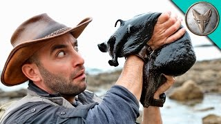 Download IT'S HUGE! Giant Black Slug! Video