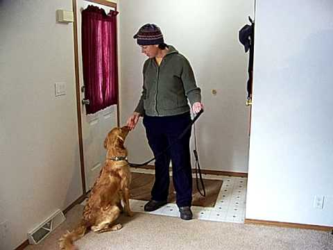 #5 Layla - modifying 'dog jumping up' behavior - session #5
