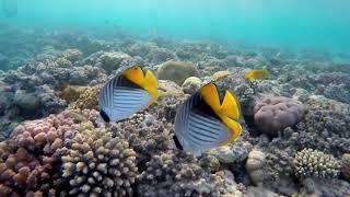 Sleep Music in Underwater Paradise#2/ HD/✨Underwater Ambience, Deep Relaxing Music, Meditation Music