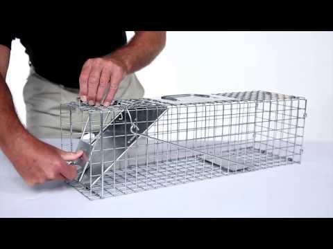 How to Set: Havahart® Medium 1-Door Trap Model #1078 for Skunks, Rabbits & Squirrels