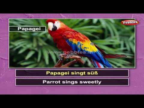 Learn Birds in German | Learn German Through English | Learn German For Beginners | German Grammar