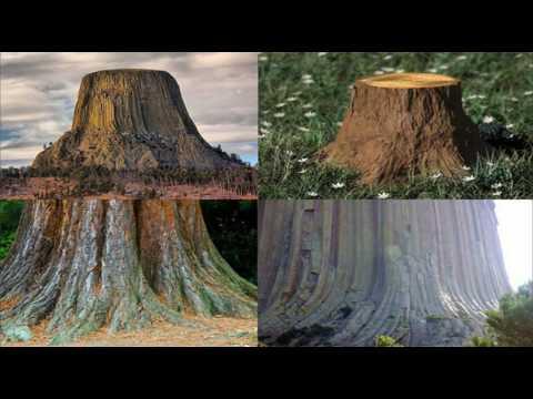 Silicon Trees, Giant Stumps, Flat Earth, NASA's tales, etc.
