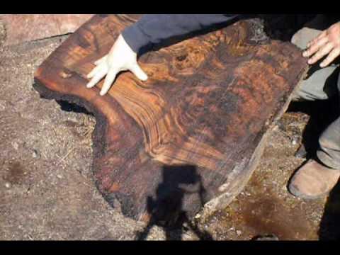 Claro Walnut Burl Cutting by OregonBurls.com