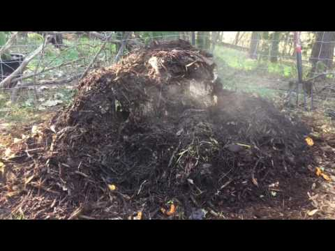 Wood chip compost pile is steaming hot!