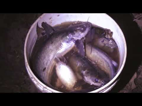 Catfishing Day and Night, Runnin' Yo Yo's