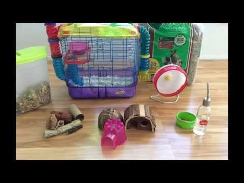 Essentials Needed For A Hamster