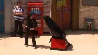 Clyde & Seymour (SeaWorld: San Diego) - Choking Clyde:)