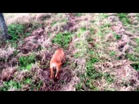 My dog hunts bugs