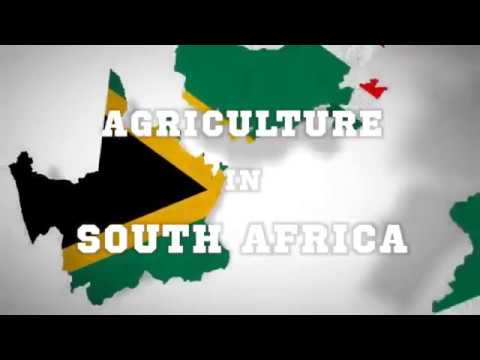 Understanding the Current State of South African Agriculture