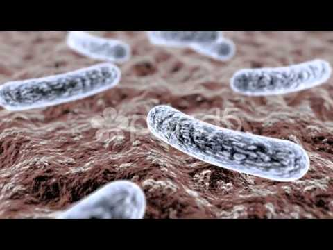 Bacteria moving footage
