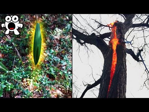 Top 10 Strangest Mysteries Discovered In the Woods