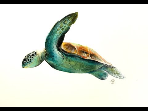 Fluid Acrylics painting like Watercolors Sea Turtle Demo