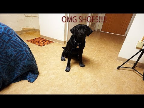 My Guide Dog Got New Shoes