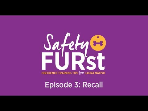 How to Train a Dog to Come When Called | Safety FURst by Embrace Pet Insurance