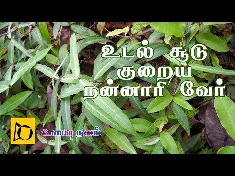 உடல் சூடு குறைய நன்னாரி வேர் | Udal Soodu Kuraiya Tips in Tamil | Nannari Benefits in Tamil