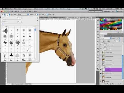 How to Change a Horse's Color in Photoshop CS5