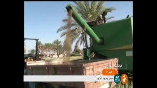 Iran Mechanized Canola harvest, Iran-Shahr county برداشت مكانيزه كلزا شهرستان ايرانشهر ايران