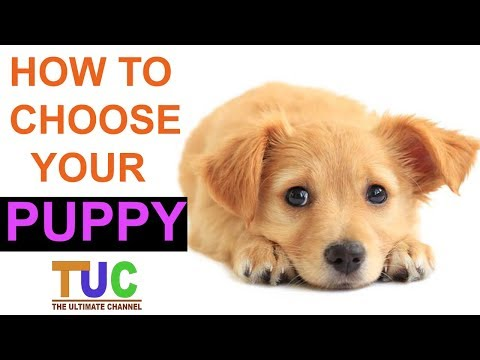 How To Choose Your Puppy In Hindi | Know Everything Before Buying | The Ultimate channel