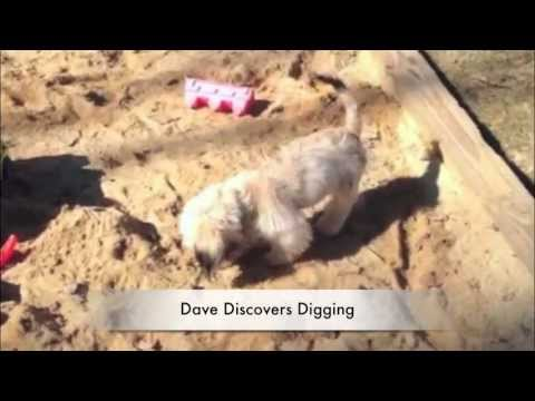 Canine Master Training Tips - How to Stop Your Dog From Digging
