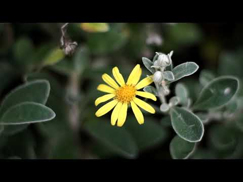 Pentax-F 50mm F1.7 Prime Lens Video Sample Test on Sony A6000