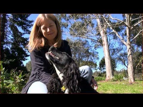 HAWKWEED DETECTOR DOGS, PART 1: TRAINING