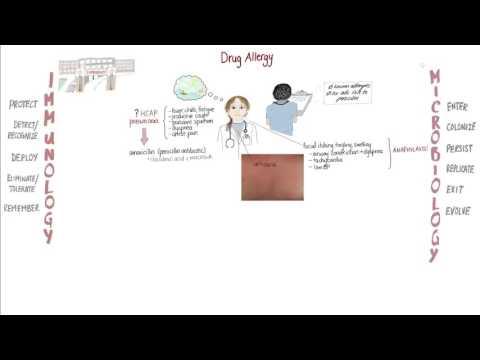 Antibiotic Allergy Springboard