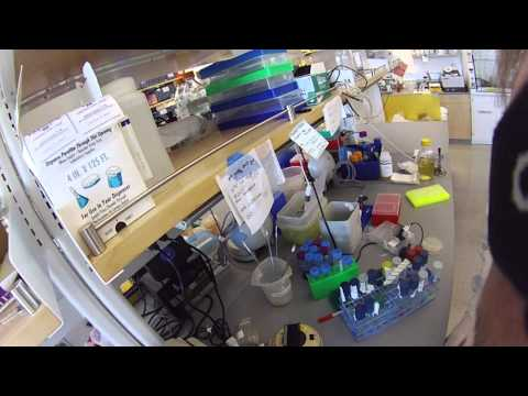 Running a PCR on a Thermocycler
