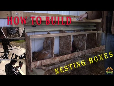 How to Build Nesting Boxes for Chickens
