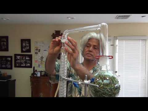 How To Make Essential Oils At Home Using Distillation - Rosemary oil shown