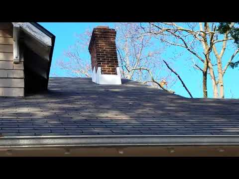 Trapping baby squirrels humanely on roof