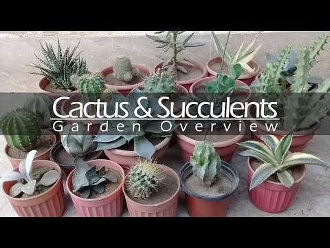 Cactus and Succulents Garden Overview - May 2018 | Terrace Garden Tour