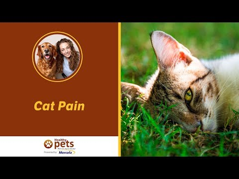 Dr. Becker Discusses Cat Pain