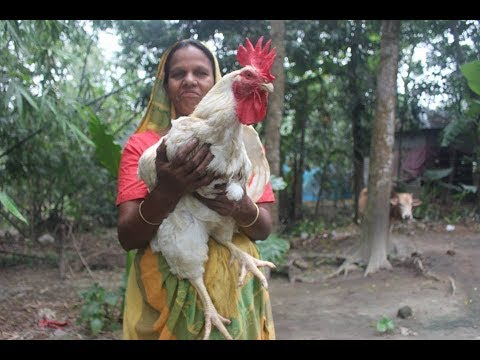 Very big 6 Kg big chicken prepared by grandmother in my village