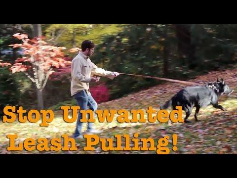 How do I teach my dog not to pull on leash?
