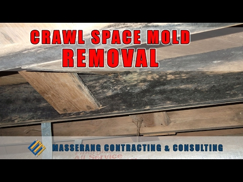 CRAWL SPACE MOLD REMOVAL | BLACK MOLD | 704.787.6972