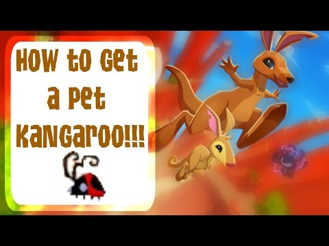 Animal Jam   How to get a pet Kangaroo!