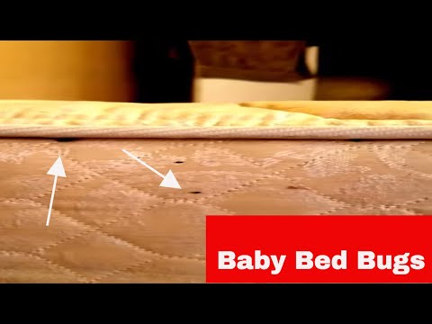 Baby bed bugs moving!
